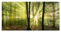 Nebelstimmung mit Sonne im Wald Fine Art Print