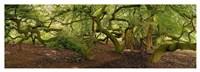 Suntelbuchenallee Fine Art Print