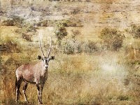 Golden Savanna Antelope Fine Art Print