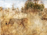 Golden Savanna Cheetah Fine Art Print