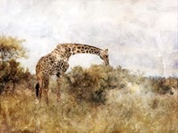 Golden Savanna Giraffe Fine Art Print