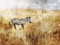 Golden Savanna Zebra Fine Art Print