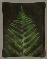 Havana Leather and Lush Fern Fine Art Print