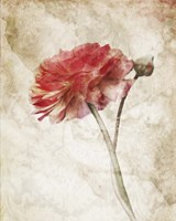 Striking Scarlet Blossom Fine Art Print