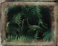 Vintage Framed Lush Ferns Fine Art Print