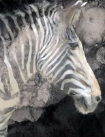 Wistful Zebra Awash Fine Art Print