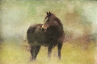 Dark Horse in A Field Fine Art Print