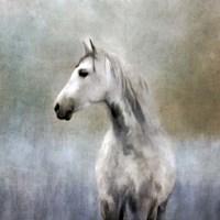 Misty Grey Dappled Horse Fine Art Print