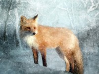 Winter Fox in Falling Snow Fine Art Print
