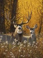 Courting Autumn Fine Art Print