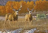 Farmland Philanderer Fine Art Print