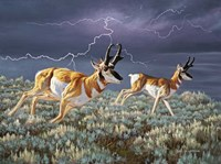 Thunder and lightning Fine Art Print
