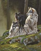 Alpine Alphas Fine Art Print