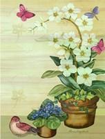 Orchids Fine Art Print