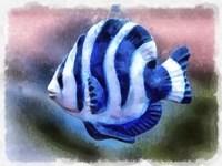 A Single Angel Fish Fine Art Print