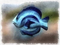 Another Single Angel Fish Fine Art Print