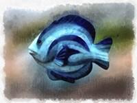 Another Single Angel Fish Fine Art Print