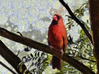 Cardinal Knowledge Fine Art Print