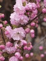 Springalicious Blossoms Fine Art Print