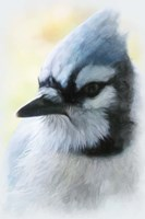 Buzz Two Point O - Portrait Of A Blue Jay Fine Art Print