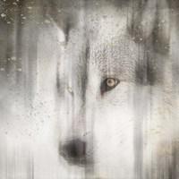 Antique Wildlife Wolf Fine Art Print