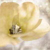 Yellow Tulip 01 Fine Art Print