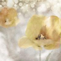 Yellow Tulip 02 Framed Print