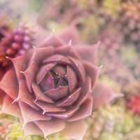 Succulents 02 Fine Art Print