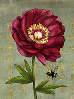 Background Peony 1 Fine Art Print