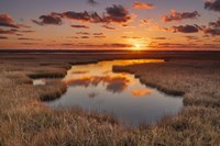Golden Marsh Fine Art Print