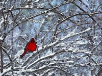 Cardinal in the Snow Fine Art Print