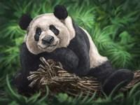 Peaceful Panda Fine Art Print