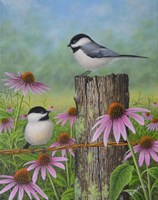 Chickadees and Coneflowers Fine Art Print