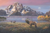 Courting Mt Moran Fine Art Print