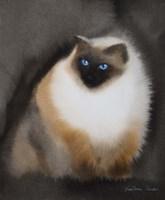 Birman Cat Fine Art Print