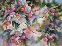 Crab Apple Blossoms I Fine Art Print