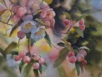 Crab Apple Blossoms II Fine Art Print