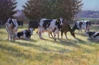 Dairy Cows Fine Art Print