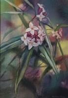 Daphne Fine Art Print