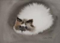 Fluffy White Cat Fine Art Print