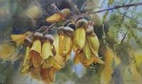 Kowhai Tree Blossoms I Fine Art Print