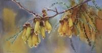 Kowhai Tree Blossoms II Fine Art Print