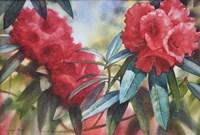 Red Rhodo Fine Art Print