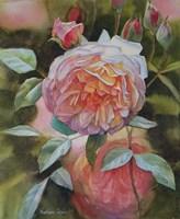 Rose Grace Fine Art Print