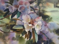 White Rhododendron in Dapped Light Fine Art Print