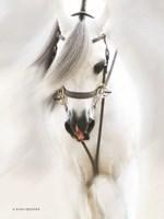 Dream Horse Fine Art Print