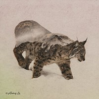 Lynx - North Fine Art Print