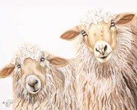 Ba Ba White Sheep Fine Art Print