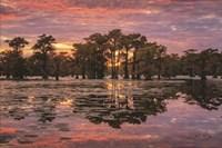 Sundown in the Swamps Fine Art Print