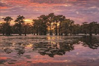 Sundown in the Swamps Fine Art Print